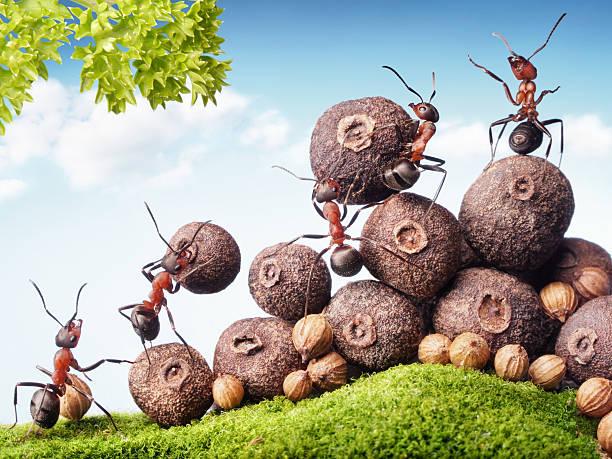 Ameisen Sie die Samen auf Lager, Teamarbeit – Foto