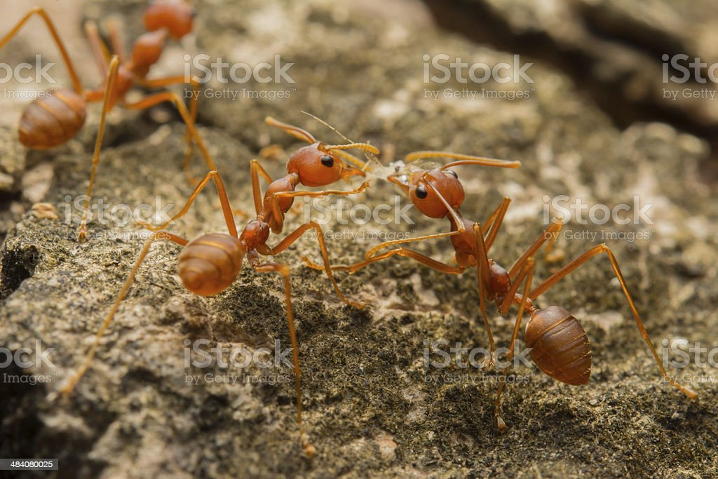 Ant's Competition stock photo