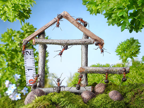 Ameisen Aufbau wooden house – Foto