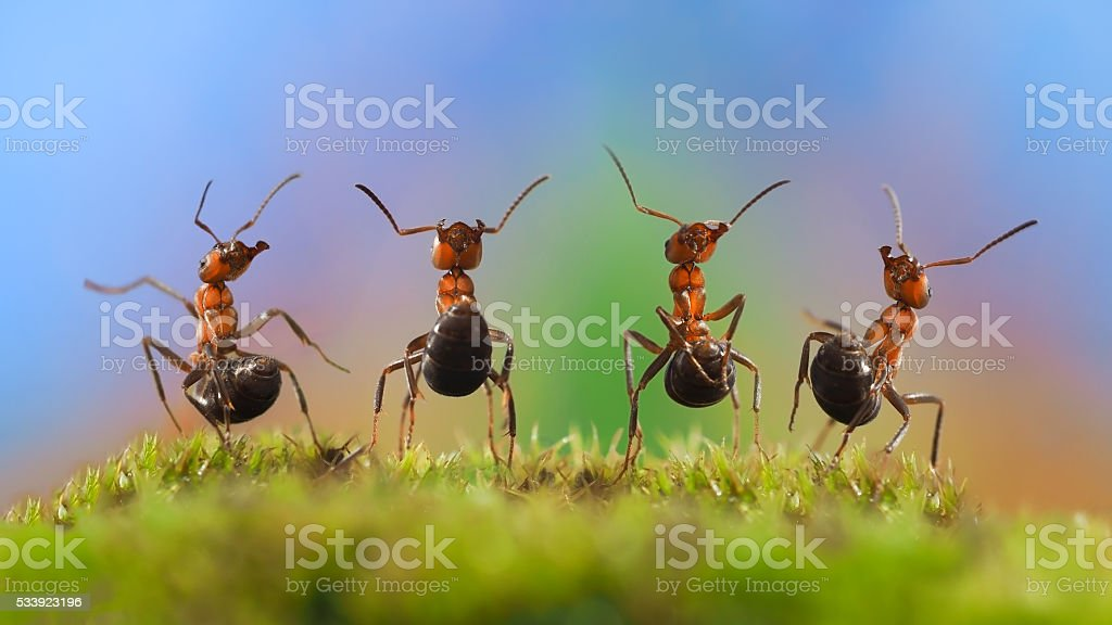 Ants dancing. Glade, moss stock photo
