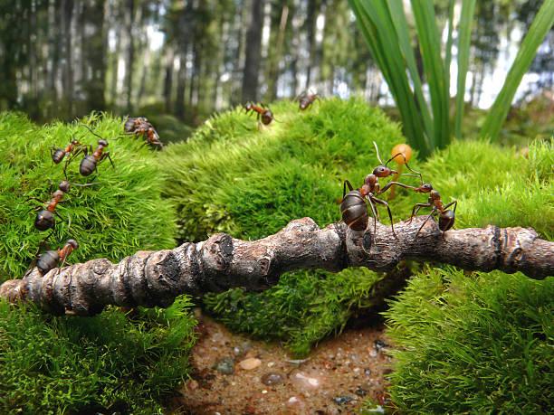 Ameisen zur Schule – Foto