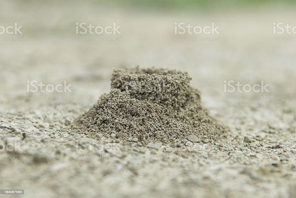 Ants home stock photo