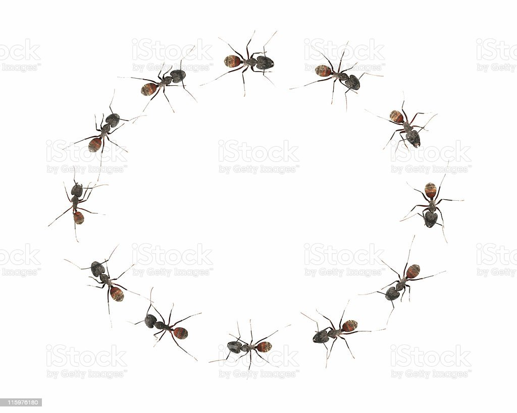 Ants in a circle 01 royalty-free stock photo