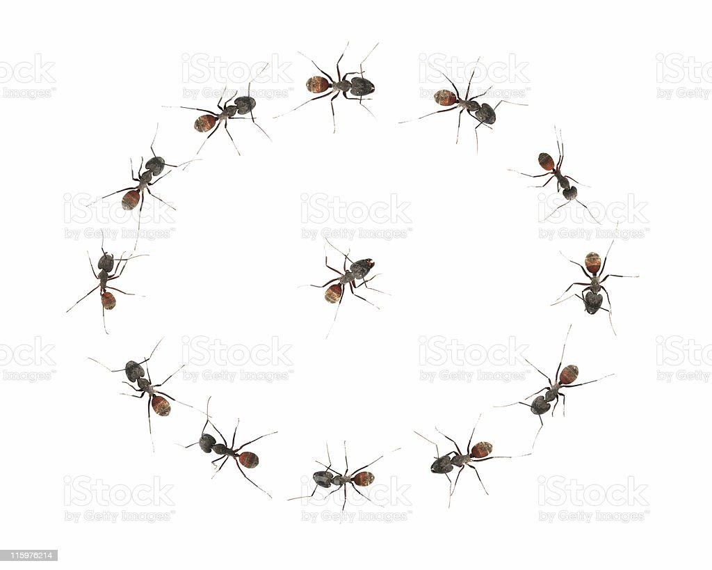 Ants in a circle 03 royalty-free stock photo