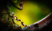 Teo ants meet in a tree and communicates, backlit romatic light, vignette