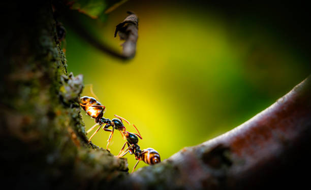 Ants in love stock photo