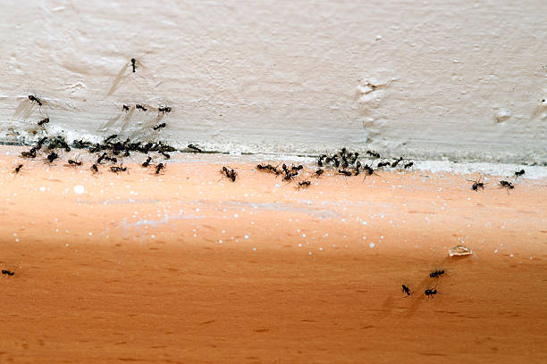 Ants in the House Ants infestation in the house. Need to call pest control. ant stock pictures, royalty-free photos & images
