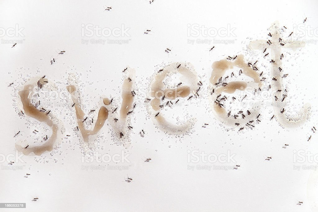 Ants like sweet royalty-free stock photo