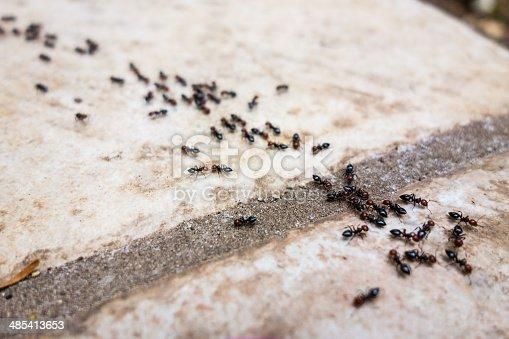 istock Ant's line 485413653