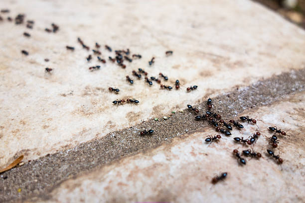 Ant's line a lot of ants traveling in a row on the pavement ant stock pictures, royalty-free photos & images