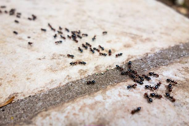 Ant's line foto