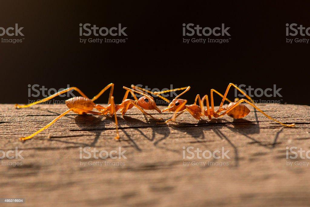 Ants macro photography stock photo