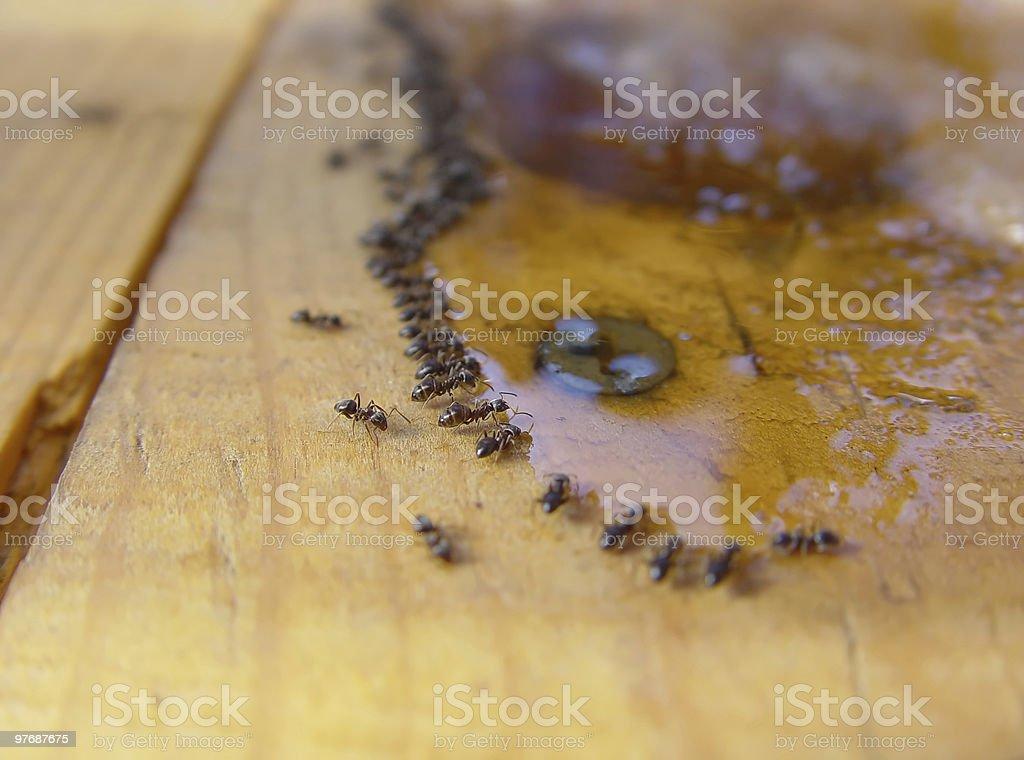 Ants Macro stock photo