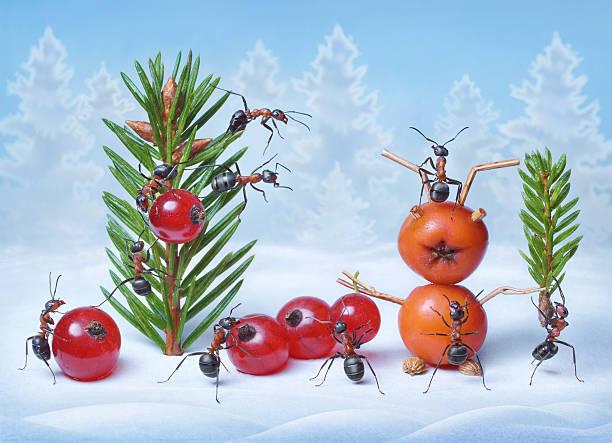 Ameisen machen Weihnachtsbaum und Santa Claus für Silvester – Foto