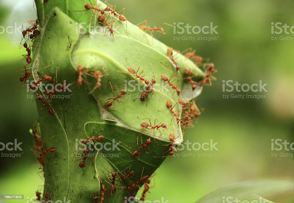 Ants' Nest stock photo