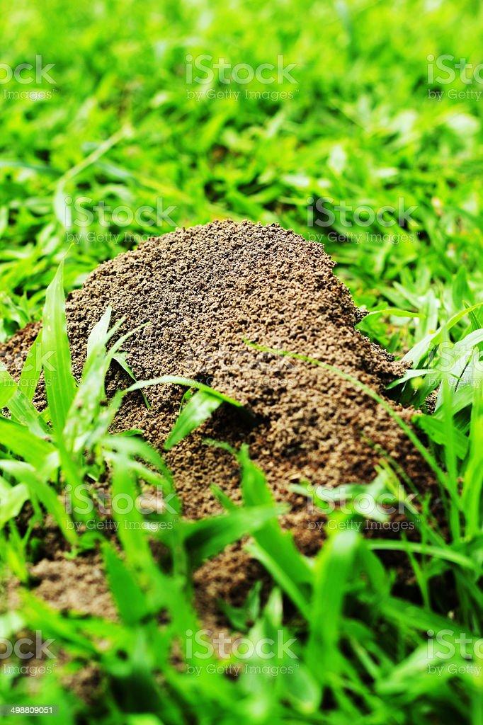 Ants nest royalty-free stock photo
