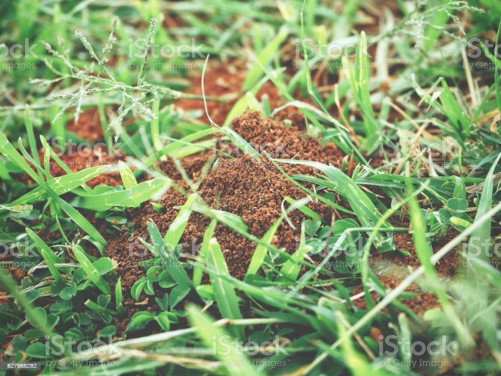 Ants nest stock photo