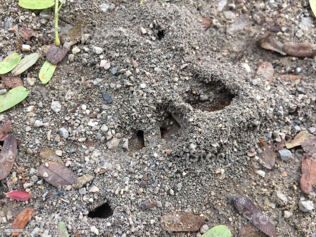 ant's nest stock photo