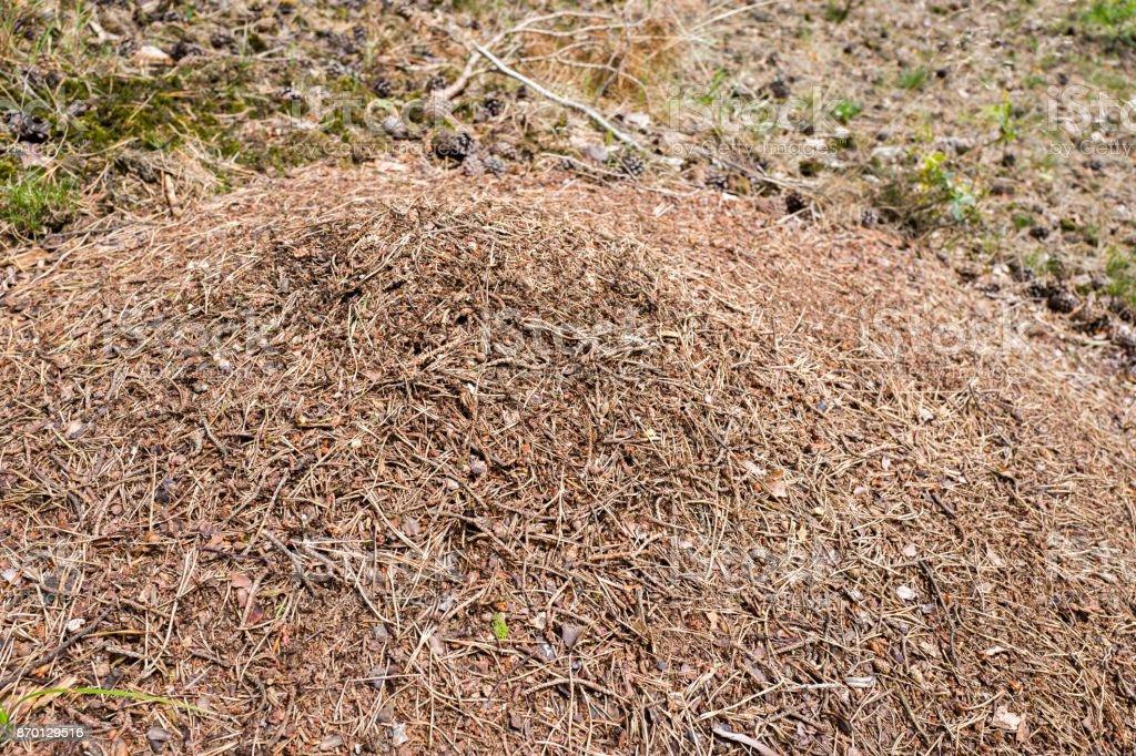 Ants nest. stock photo