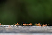 - five poses of ant