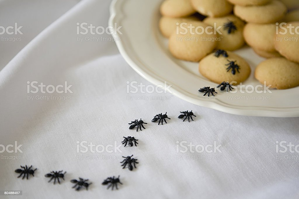 Ants on biscuits stock photo