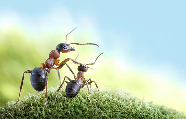 Ameisen, Kinderbetreuung Konzept – Foto