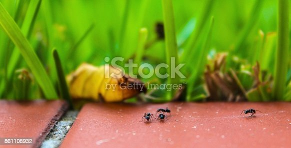 istock Ants on the floor 861108932