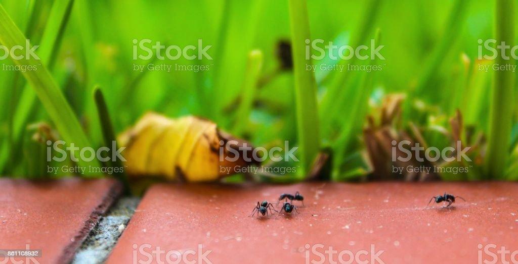 Ants on the floor stock photo