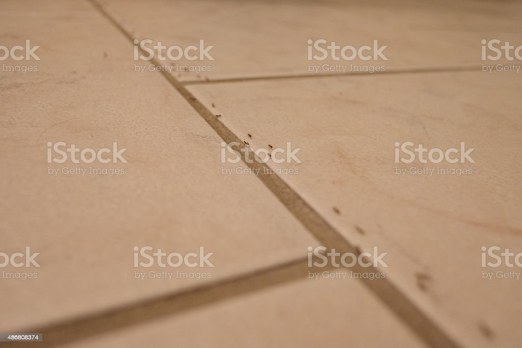 Ants on the kitchen floor stock photo