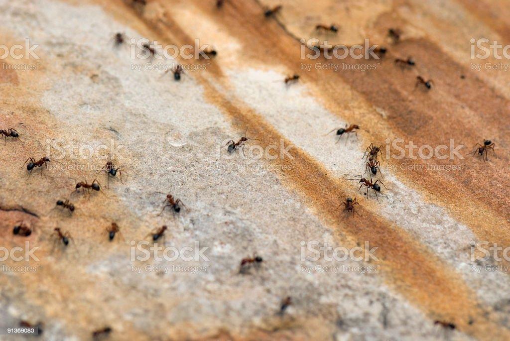 Ants on Walkway stock photo