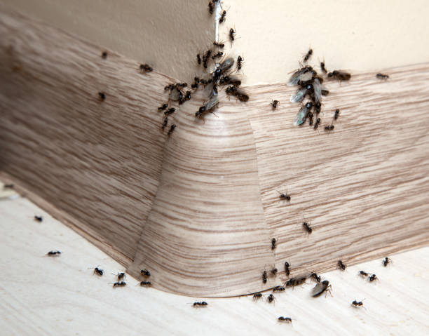 Ants Ants in the house on the baseboards and wall angle pest stock pictures, royalty-free photos & images