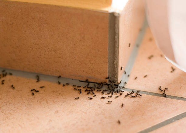 Ants plague Ants crawling inside of home on the floor ant stock pictures, royalty-free photos & images