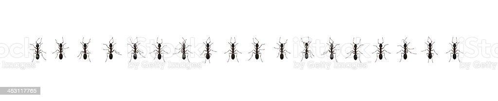 Ants queue royalty-free stock photo