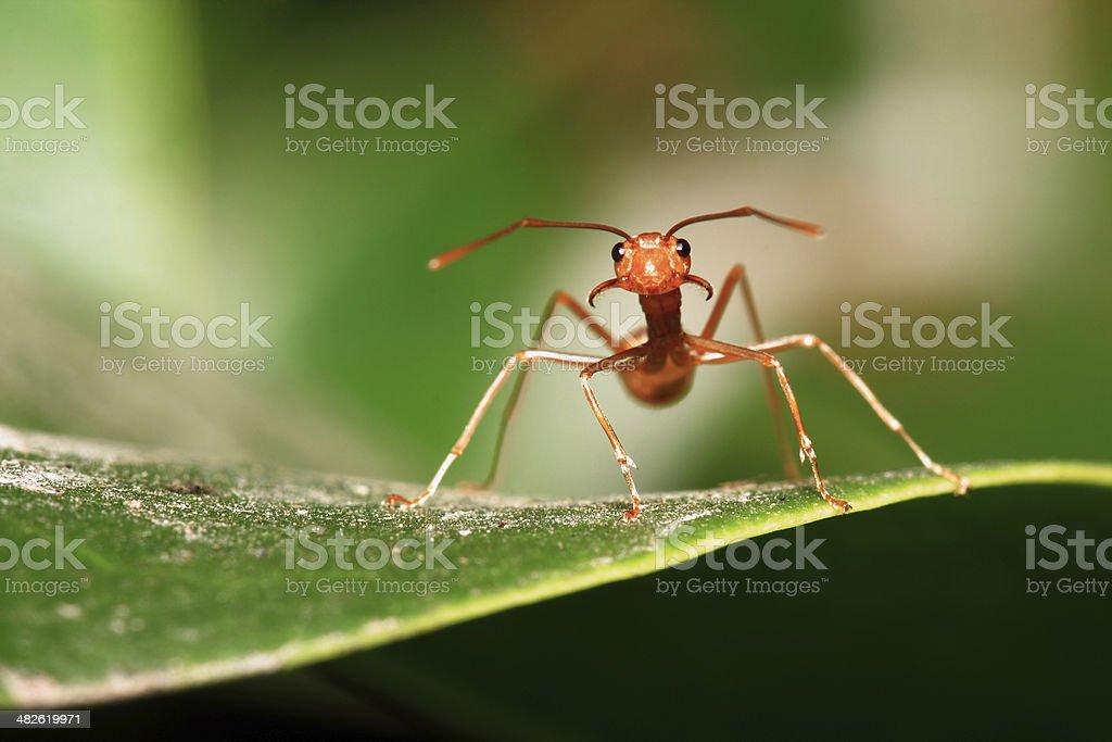 Ants symbol of unity stock photo