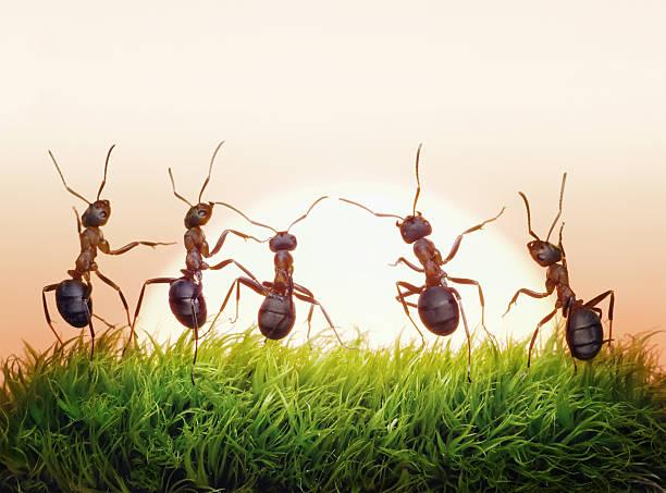 Ameisen team auf den Sonnenaufgang, Konzept der Erfolg – Foto
