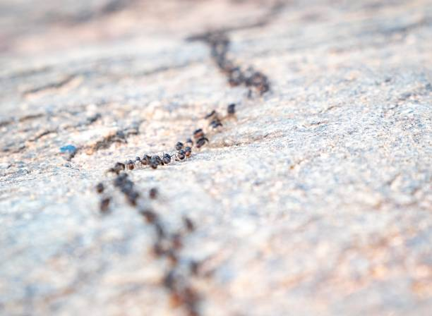 Ants travels stock photo