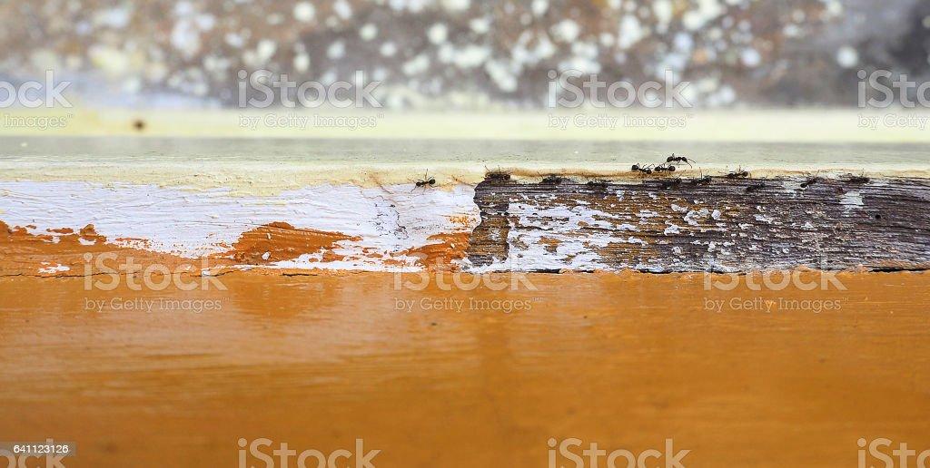 Ants walking stock photo