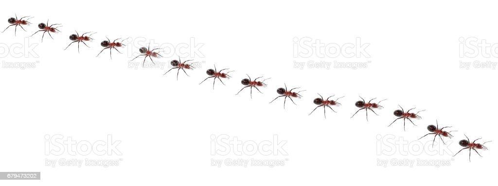 螞蟻漫步 免版稅 stock photo
