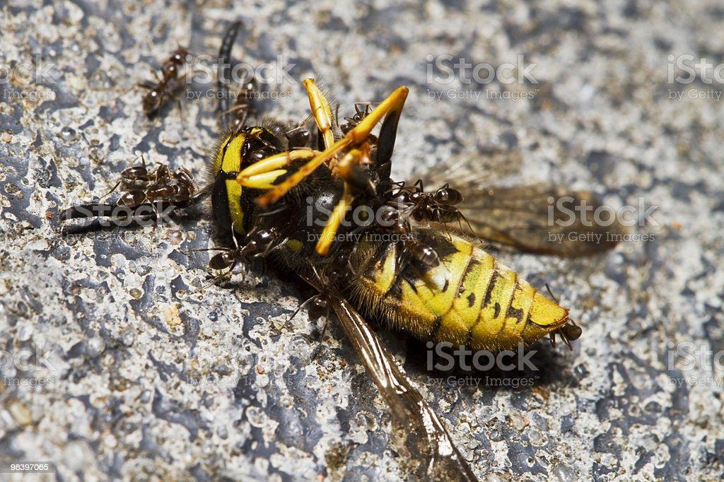 Ants & 말벌 royalty-free 스톡 사진
