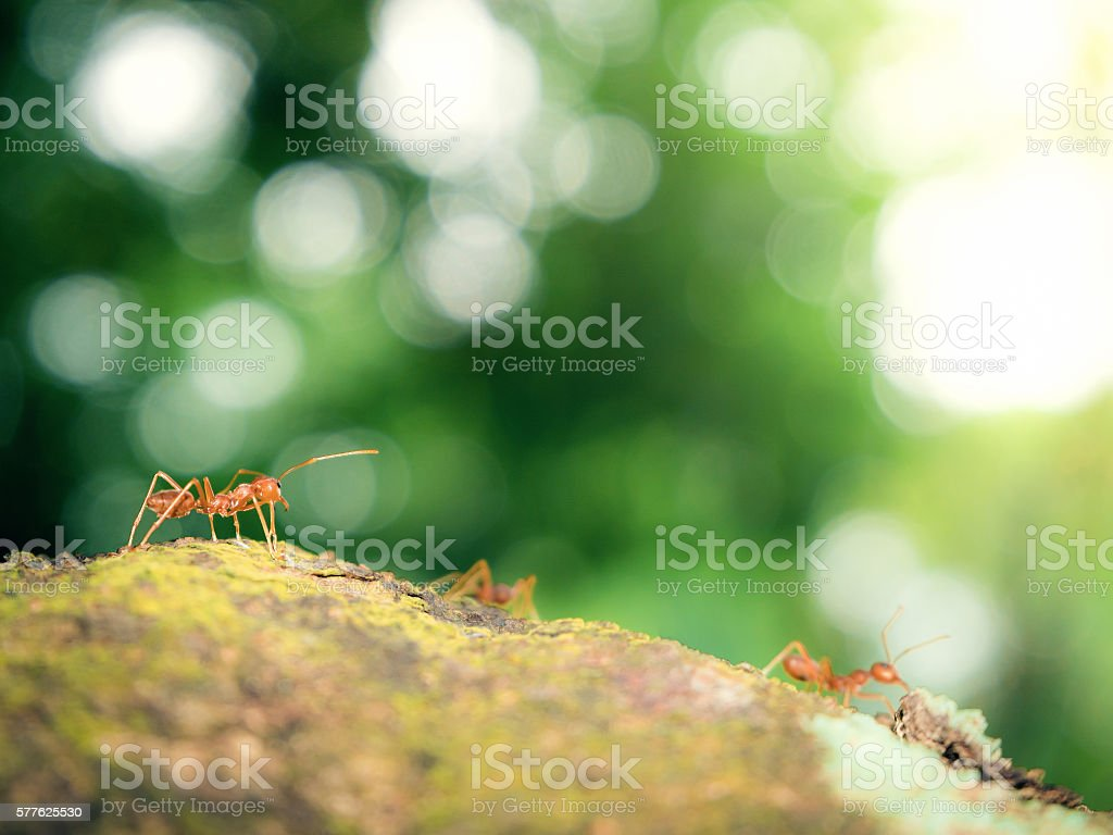 Ants Working On The Tree Stock Photo More Pictures Of Animal Istock
