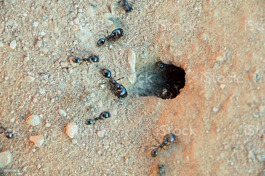 ants working together stock photo