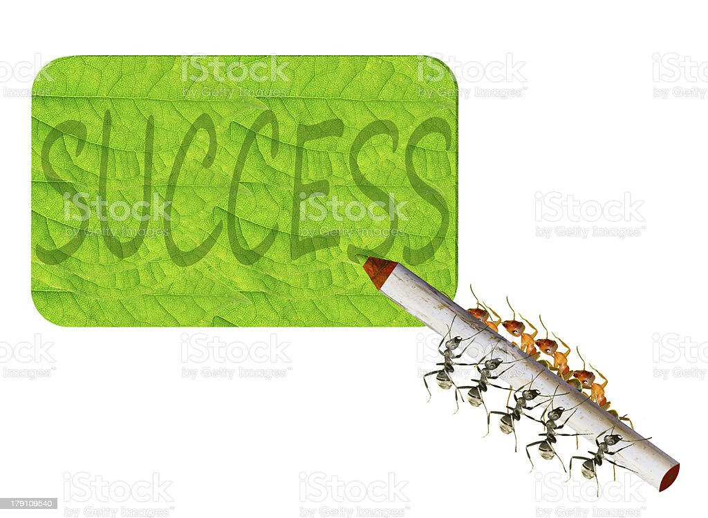 Ants writing royalty-free stock photo