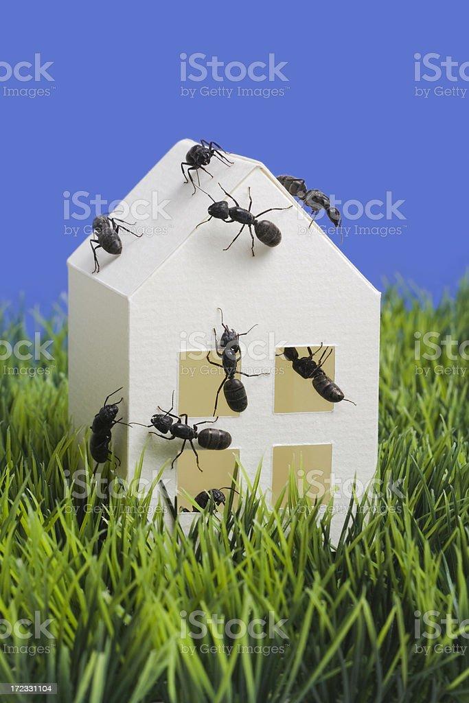 Antsy stock photo
