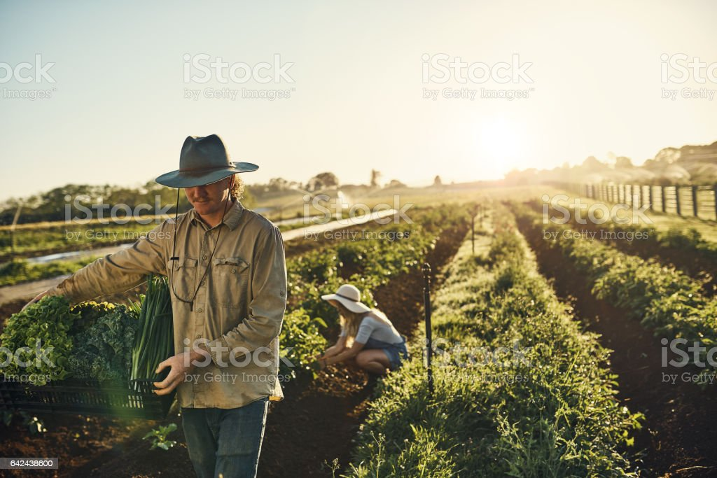 Anything fresher is still growing stock photo