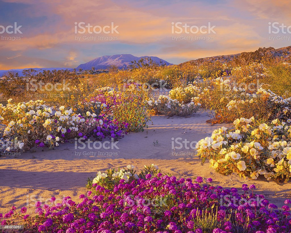Anza Borrego Desert State Park, California stock photo