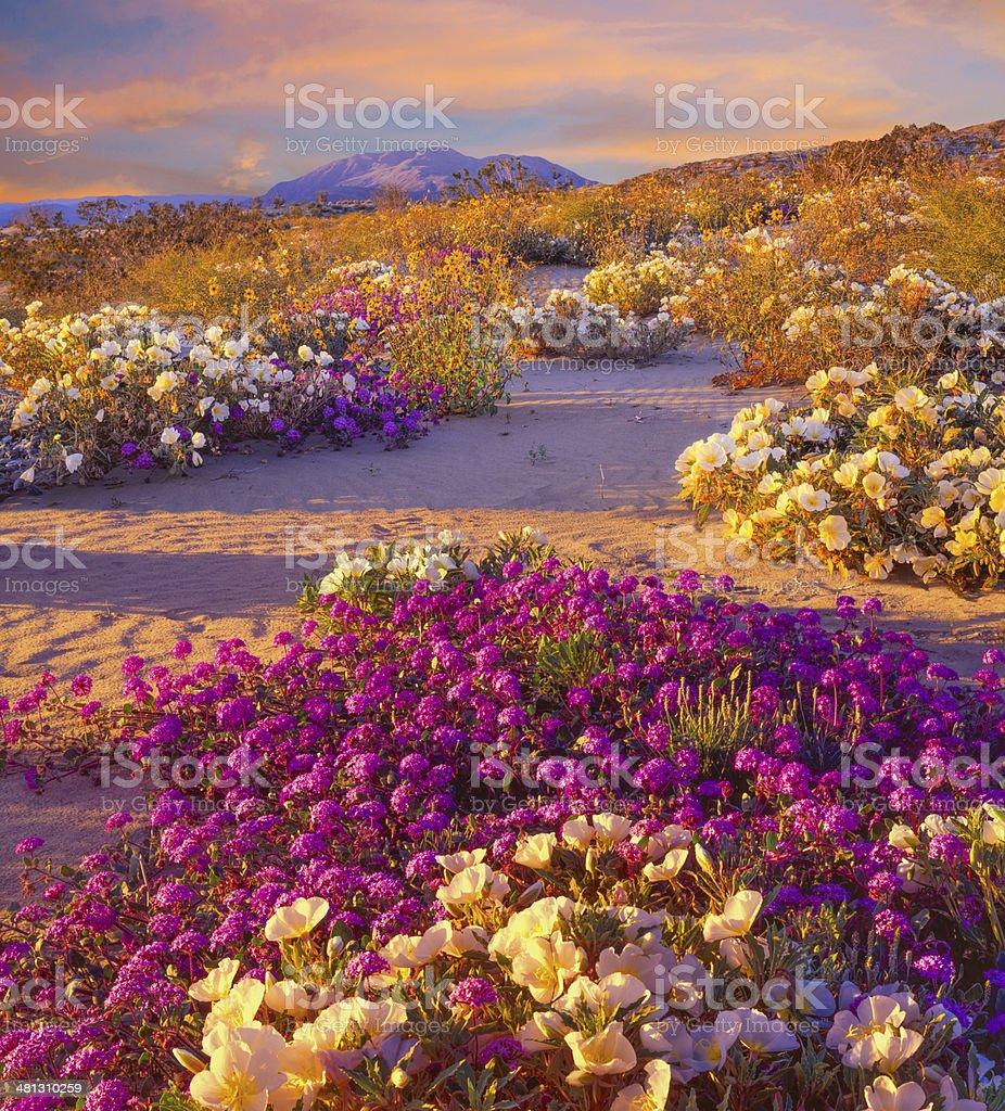 Anza Borrego Desert State Park, California stock photo