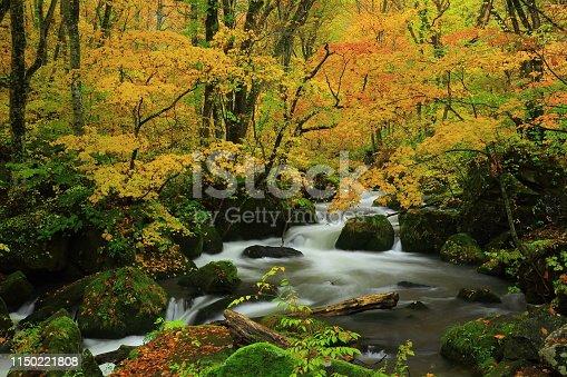 Aomori Prefecture mountain stream of colored leaves