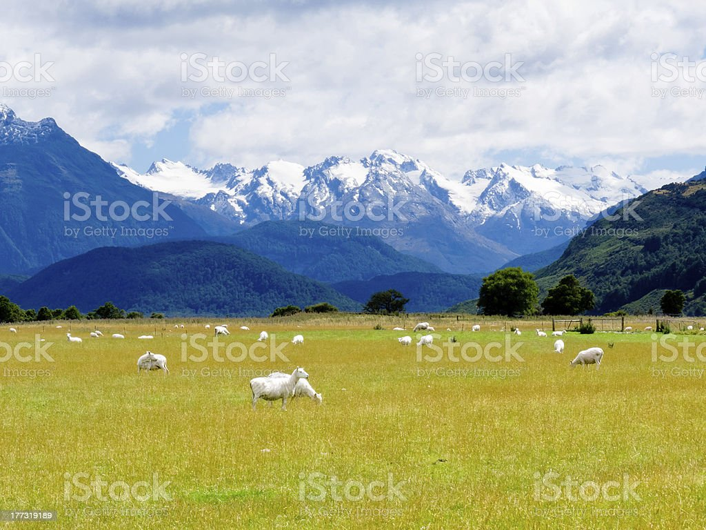 Aoraki, Mt Cook highest peak of Southern Alps, NZ stock photo