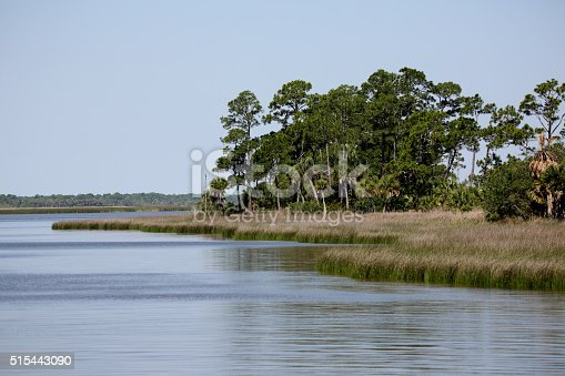 Apalachicola Bay shoreline with grasses and trees