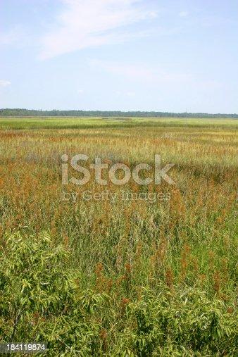 Apalachicola River basin in Florida.